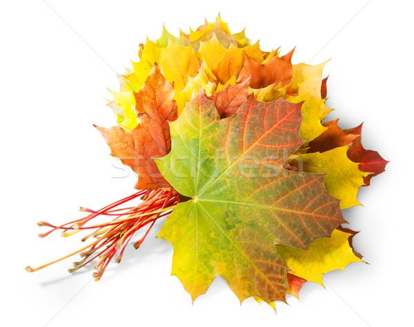 Buket sonbahar yaprakları yalıtılmış beyaz doğa sanat Stok fotoğraf © Cipariss