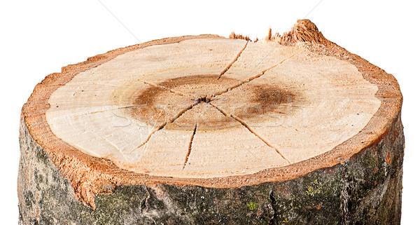Vág fa vízszintes izolált fehér fa Stock fotó © Cipariss