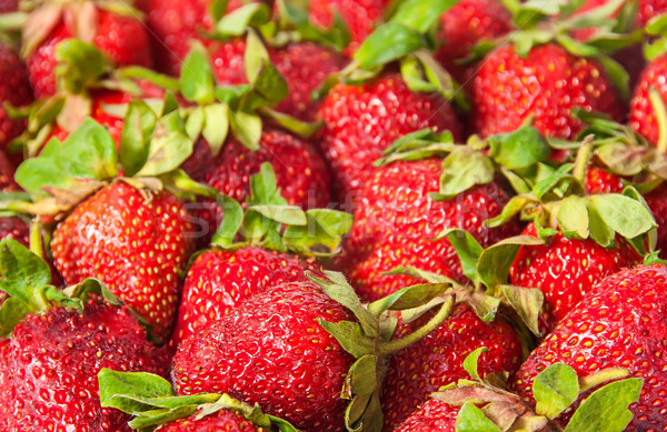 Red strawberries with green tails Stock photo © Cipariss