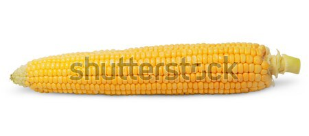 Purified ear of corn Stock photo © Cipariss