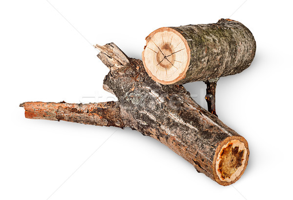 Two poplar logs rotated Stock photo © Cipariss
