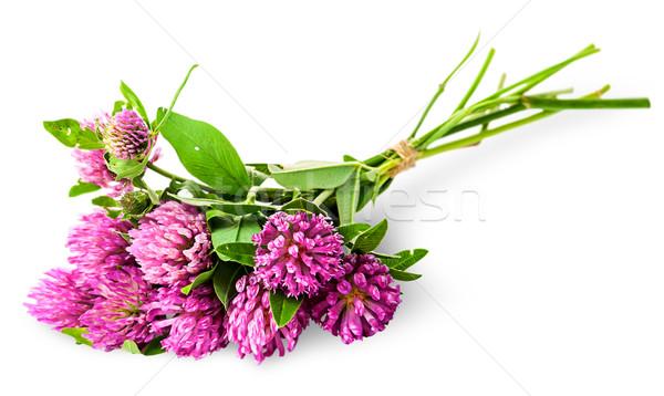 Bouquet trèfle corde isolé blanche fleur Photo stock © Cipariss