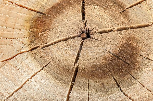 Peuplier coupé fissures résumé bois forêt Photo stock © Cipariss