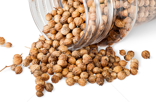 Stock photo: Coriander seeds are poured out from a jar