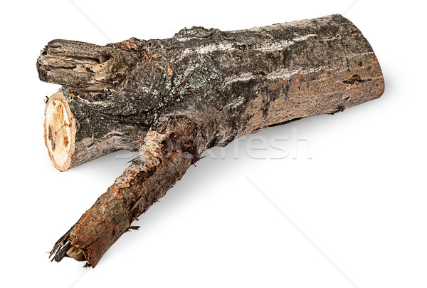 Single poplar log horizontally Stock photo © Cipariss