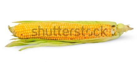Pelé oreille maïs isolé blanche Photo stock © Cipariss