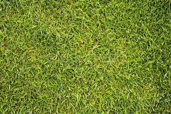 Grass texture Stock photo © cla78