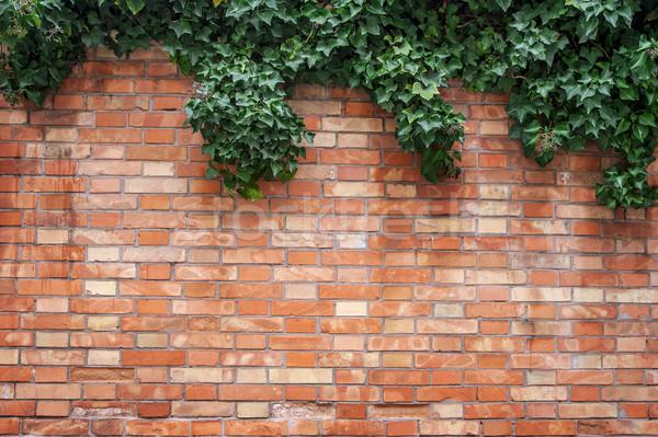 ツタ 壁 工場 レンガの壁 テクスチャ ツリー ストックフォト © cla78