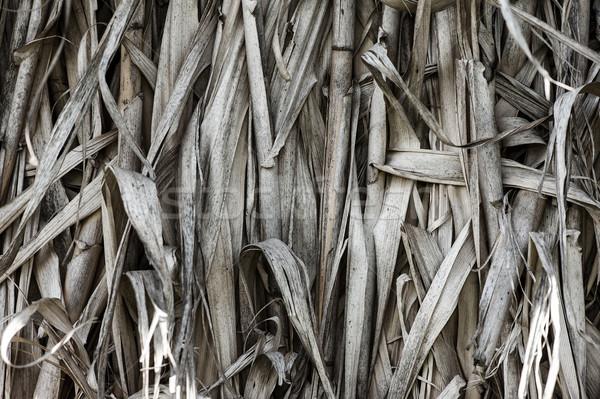 Dry grass texture Stock photo © cla78