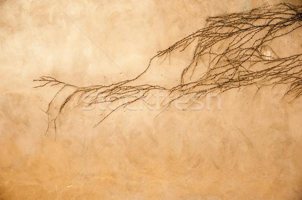 Creeper on a wall Stock photo © cla78