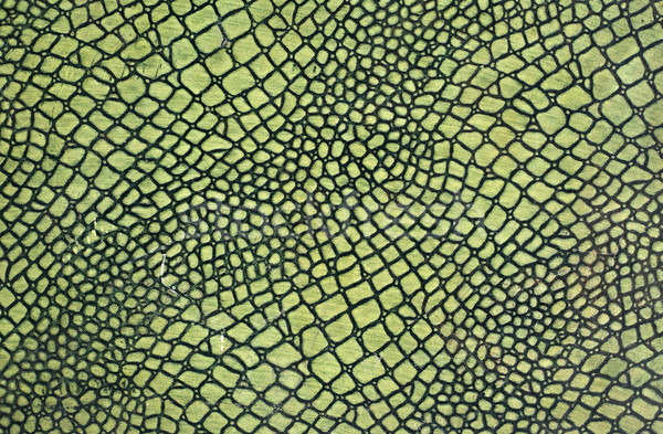 Green snake skin Stock photo © cla78