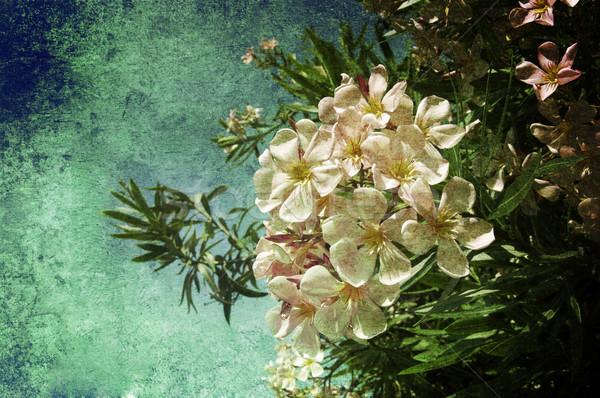 Fehér virágok sok öreg kép virág textúra Stock fotó © cla78