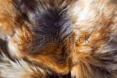 Kürk doku hayvan renkli soyut Stok fotoğraf © cla78