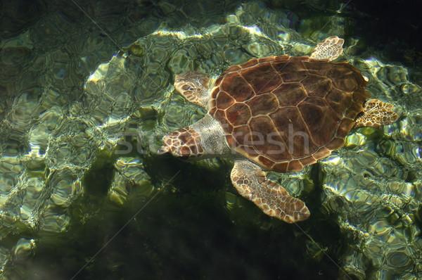 Teknős vízi óceán utazás piros trópusi Stock fotó © cla78