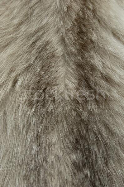 мех текстуры животного аннотация Сток-фото © cla78