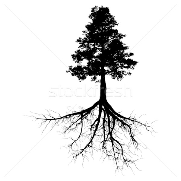 Black tree with roots Stock photo © cla78