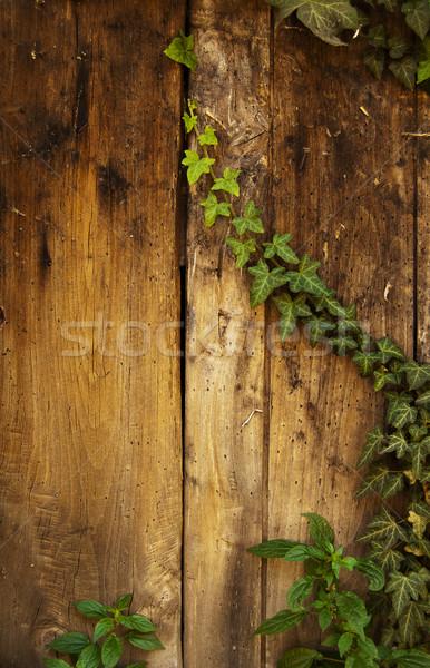 Klimop hout plant tabel hardhout textuur Stockfoto © cla78