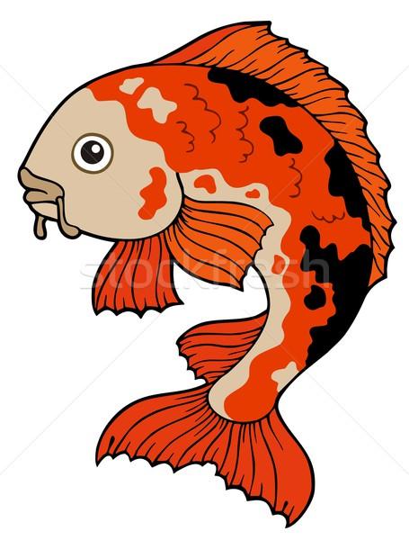 ニシキゴイ 魚 白 水 眼 自然 ストックフォト © clairev