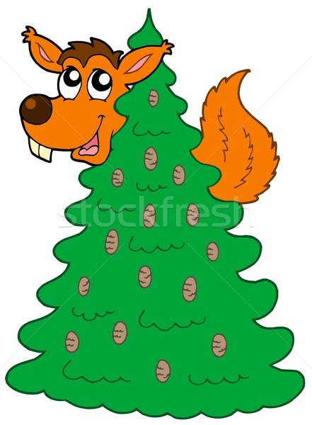 Squirrel on coniferous tree Stock photo © clairev