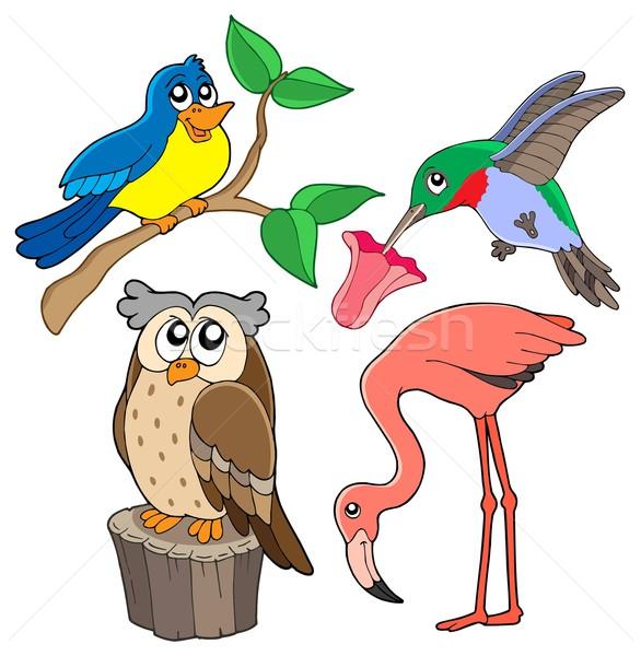 Foto stock: Aves · coleção · água · árvore · natureza