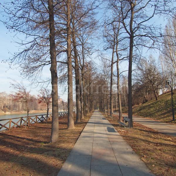 Path among trees Stock photo © claudiodivizia