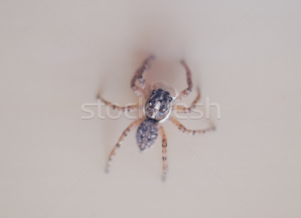 Spider Stock photo © claudiodivizia