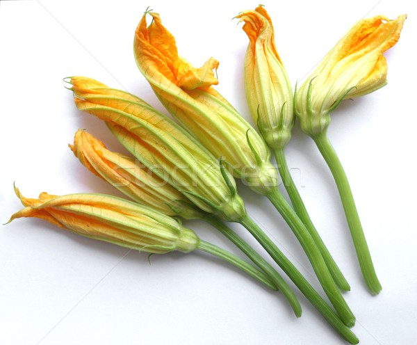 Courgette courgette bloemen witte Stockfoto © claudiodivizia