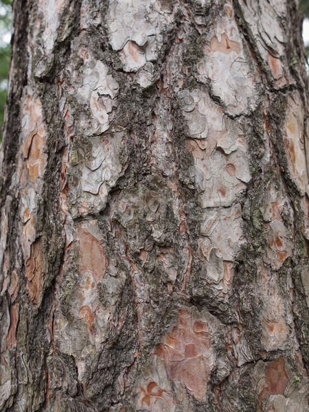 Fa ugatás hasznos háttér bőr kagyló Stock fotó © claudiodivizia