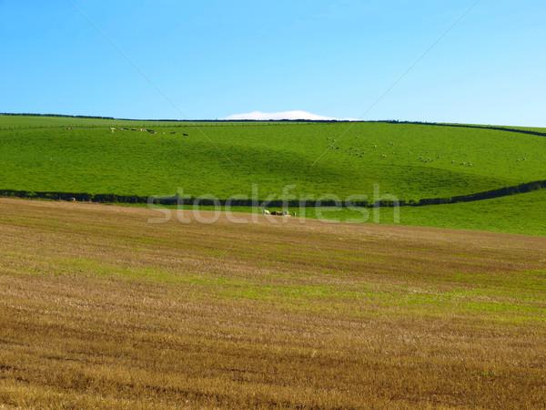 Hill panorama panorama view colline Glasgow Foto d'archivio © claudiodivizia