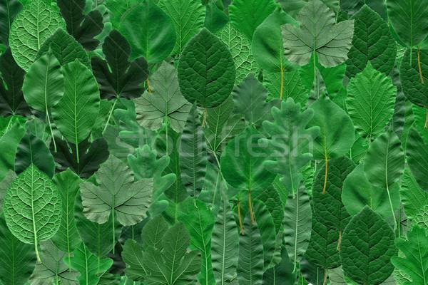 Leaves collage Stock photo © claudiodivizia