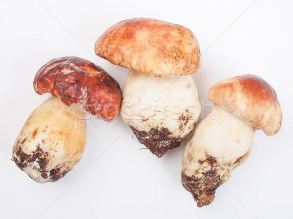 Di funghi porcini boletus penny cucina Foto d'archivio © claudiodivizia