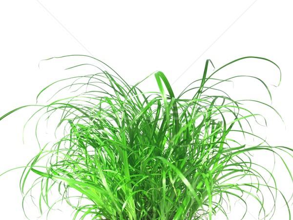 Grama prado erva daninha grama verde branco árvore Foto stock © claudiodivizia