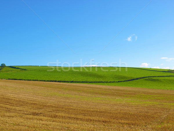 Hill panorama panoramica panorama view colline Foto d'archivio © claudiodivizia