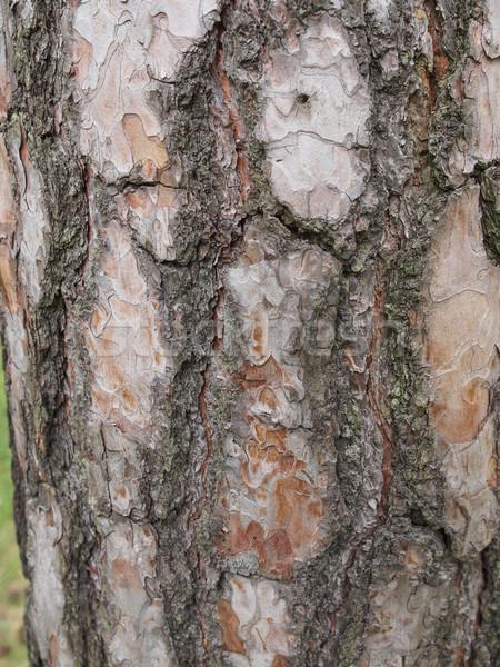 Boom schors nuttig achtergrond huid shell Stockfoto © claudiodivizia