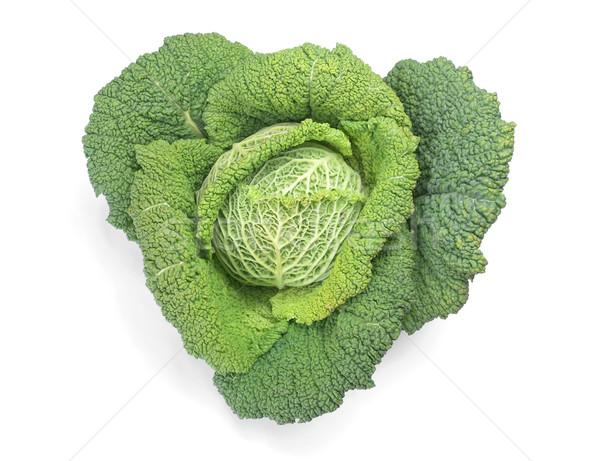 Kohl Gemüse Anlage essbar Blätter weiß Stock foto © claudiodivizia