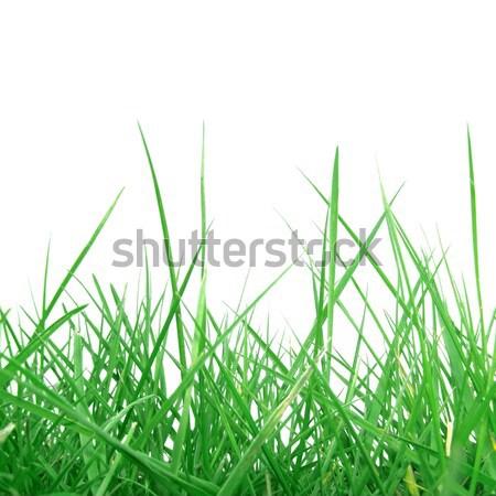 Grama prado erva daninha útil árvore campo Foto stock © claudiodivizia