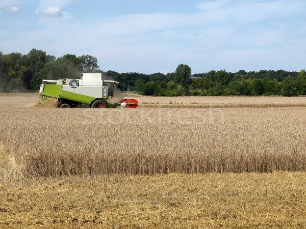 Harvest Stock photo © claudiodivizia