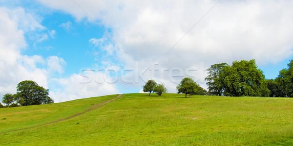 Foto stock: Prímula · colina · Londres · parque · inglaterra · árvore