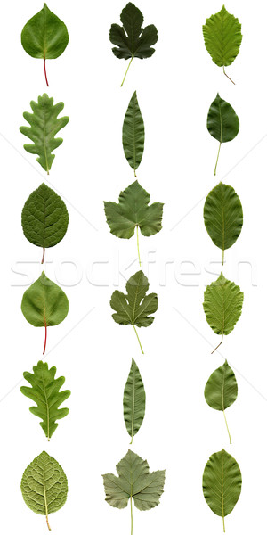 Leaves collage Stock photo © claudiodivizia