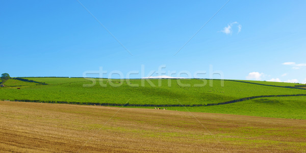 Hill panorama panorama view colline Glasgow Foto d'archivio © claudiodivizia