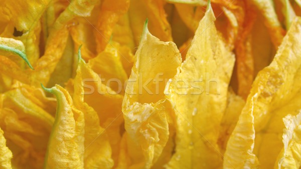 Courgette flowers Stock photo © claudiodivizia