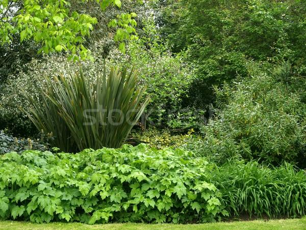 Növényzet zöld levelek hasznos textúra természet háttér Stock fotó © claudiodivizia