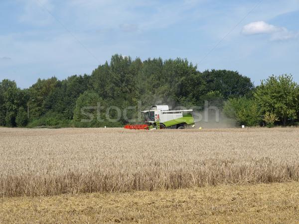 Stock photo: Harvest