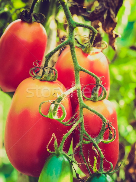 Retro look Tomato Stock photo © claudiodivizia