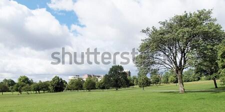 Foto stock: Prímula · colina · Londres · parque · inglaterra · céu