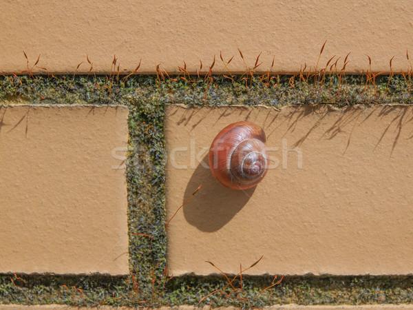Naaktslak slak dier muur natuur achtergrond Stockfoto © claudiodivizia