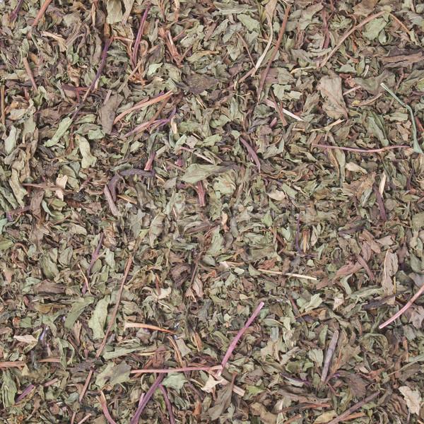 Aszalt borsmenta részlet levelek tea Stock fotó © claudiodivizia