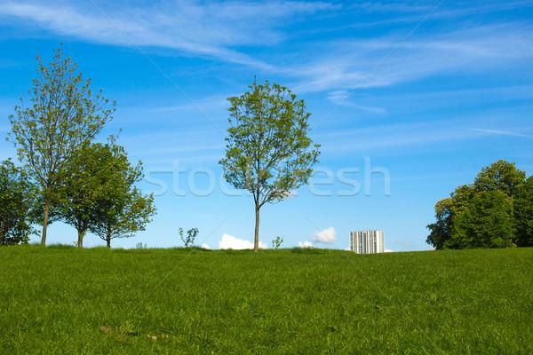 Prímula colina Londres parque inglaterra cidade Foto stock © claudiodivizia