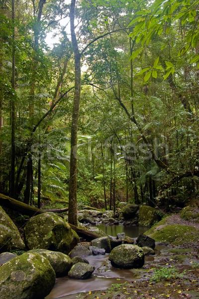 Regenwoud mooie natuur grens noordelijk water Stockfoto © clearviewstock