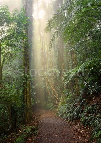 Rainforest ışık güzellik dünya miras Stok fotoğraf © clearviewstock